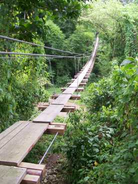Zipline bridge