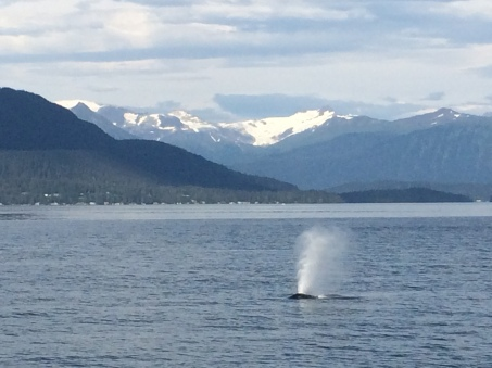 Whale seen from our balcony